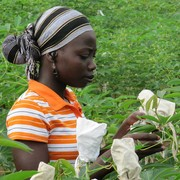 Course on Contemporary approaches to genetic resources conservation and use with fellowship opportunity