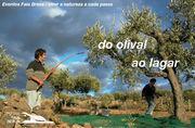 AR LIVRE: Faia Brava - do olival ao lagar