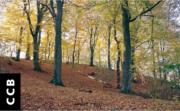 MÚSICA: Concerto de Outono