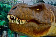 EXPOSIÇÕES: T-Rex Quando as Galinhas Tinham Dentes