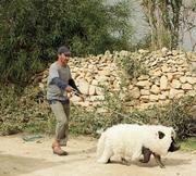 CINEMA: Um Porco em Gaza