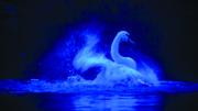 DANÇA: O Lago dos Cisnes