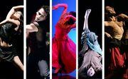DANÇA: Gala de Homenagem à Dança