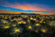 EXPOSIÇÕES: International Garden Photographer Of The Year