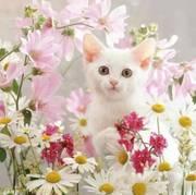 Cat Wonders
