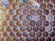 Beekeeping Class - Albuquerque