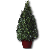 Deck the Hall - Topiary in Birch Container