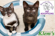 Second Chance Animal Shelter Adoptions