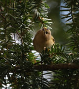 SORRY, FULLY BOOKED Talk: Birds and their Song