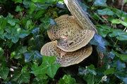 Spring Fungi Walk