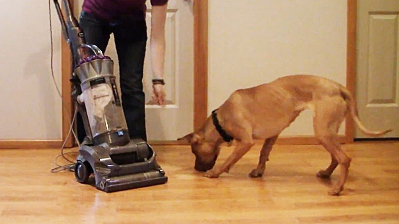 Want to know Why Your Dog Is Afraid of Vacuum Cleaners