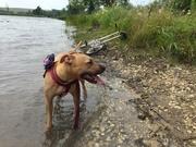 Dog & Dahon: Mallard Lake Trailside