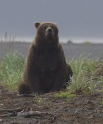 Bears-7-13-2015-12