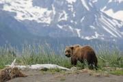 bears-galati-15