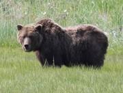 Bears-july-7-19