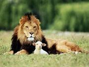 lion_lamb_