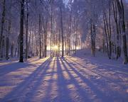Into the Silence of the Winter
