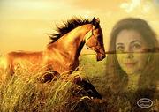 SR_cavalo