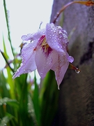 Like raindrops from the heavens, so too are the tears of my heart>