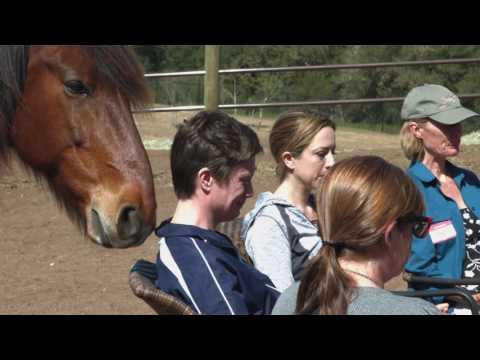 Healing Horse Circle