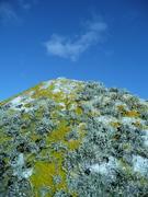 Lichen on rock like a mountain