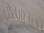 sand trees 4