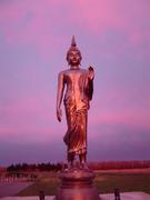 Buddha Wild8