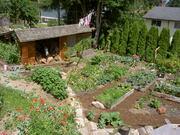 back garden July 16 07