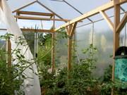 greenhouse inside July 08