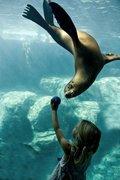 seal and girl