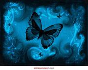butterflybleu