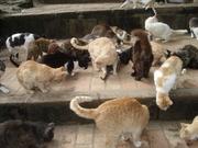 Réunion de Chats