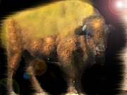the golden bison copy