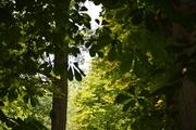 la foresta di Fontainebleau