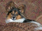 My dog, PHIL