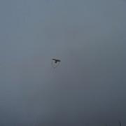 my kite way way up there