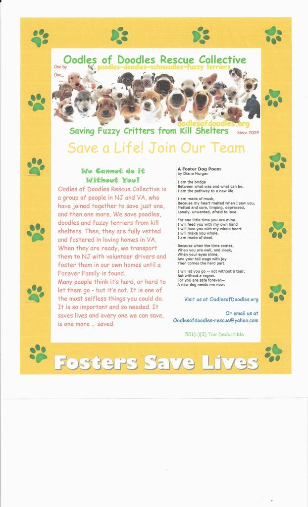 1798412845?profile=RESIZE_1024x1024 Oodle Application Form For Dogs on rescue volunteer, kennel employee, therapy printable, care employment template or, foster home,