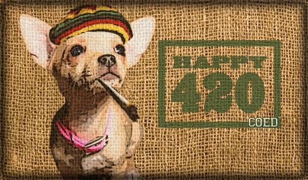 420 Chihuahua