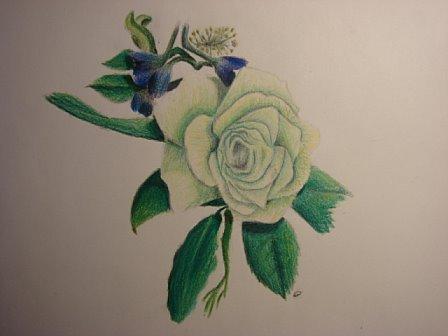 Alex's rose sketch