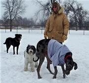Winter dog park