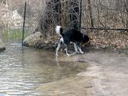 Dog beach - 3