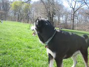 Marley in Prospect Park - 2