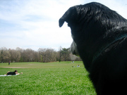 Marley in Prospect Park - 1