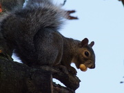 Squirrel Caught in the Act