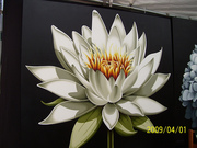 Water lily on canvas