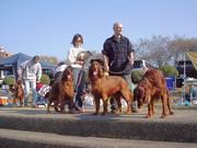 Inuyama Dog Marathon