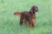 Hanna on the field