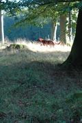 Setter i skogen