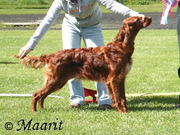 Lordly Faithfull best puppy ISC Clubshow Finland