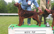 Lordly Fallinlove best puppy ISC Nederland